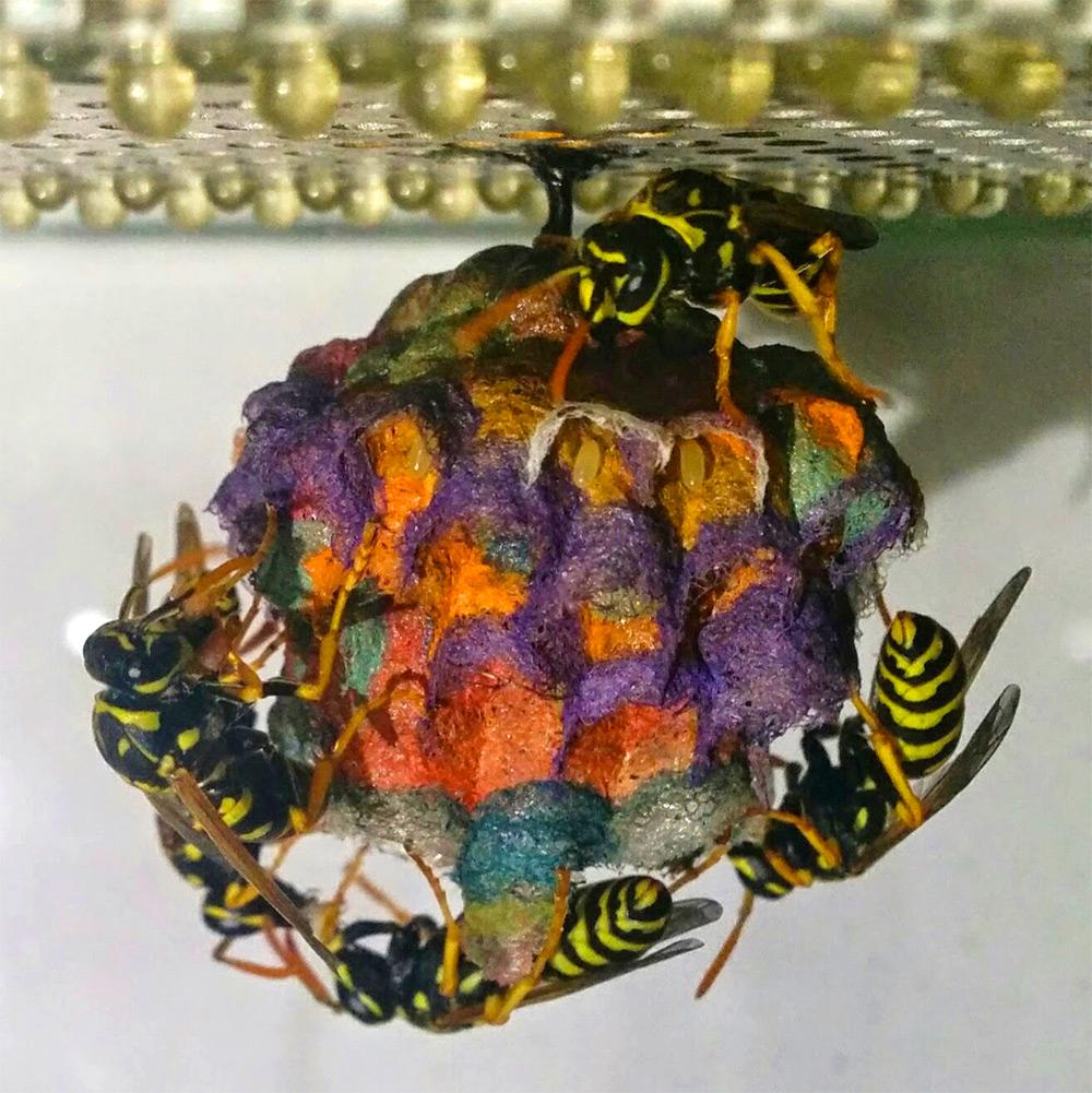 Quando la vespa è arte