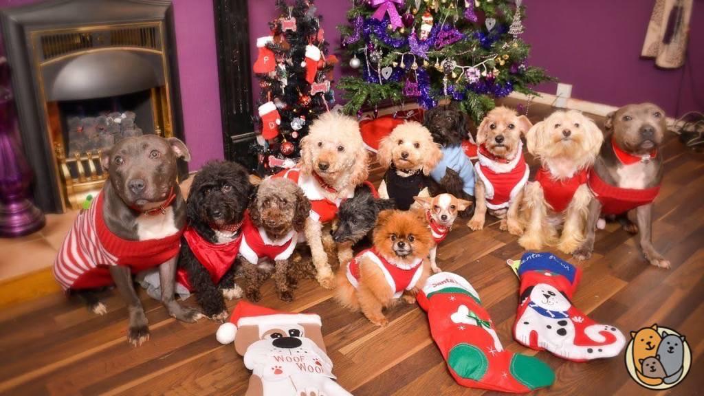 Auguri Di Natale 105.Cartoline Di Natale Per Auguri Tenerissimi 100 Foto Tenerissimi