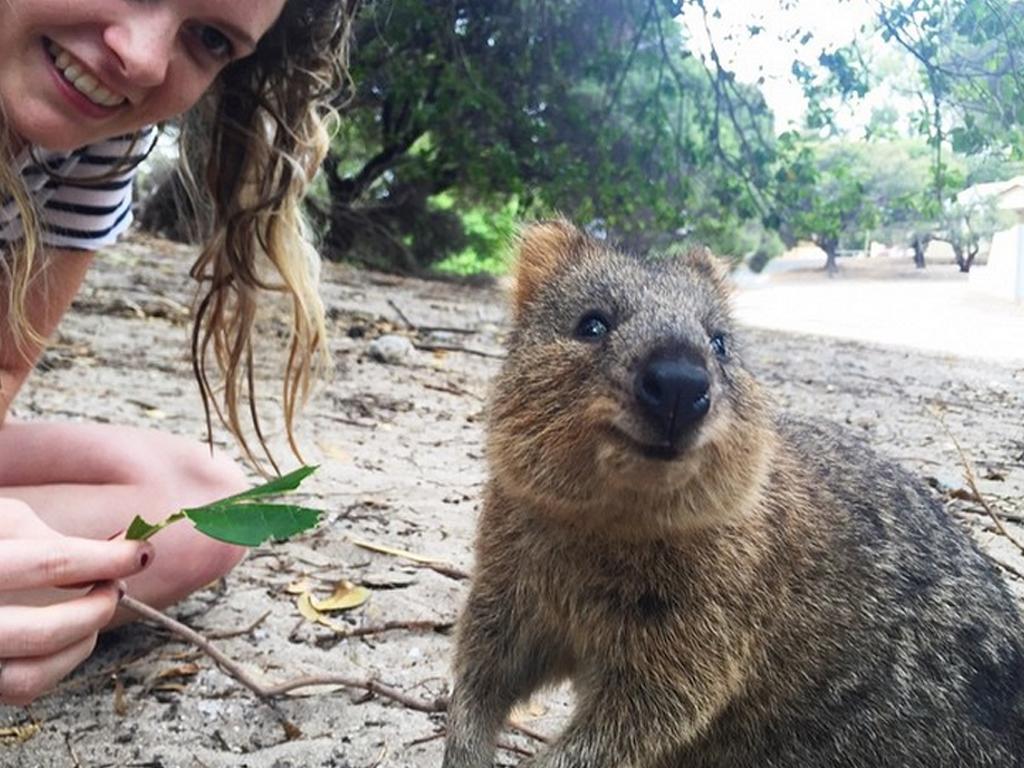 Quokka selfie